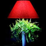 Lumipouss' 18 mois de pousse avec ficus pumilla, spathiphyllum, dracaena marginata et bicolore.